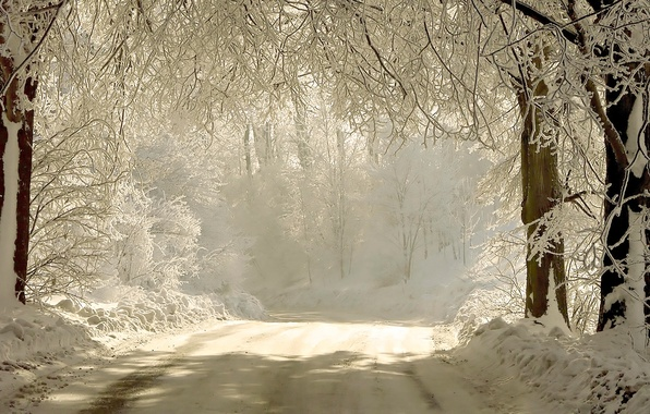 Picture winter, road, light, snow, trees, branches, nature