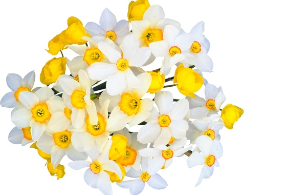 Picture flowers, freshness, beauty, bouquet, spring, white, white, yellow, yellow, flowers, beauty, Narcissus, spring, bouquet, gentle …