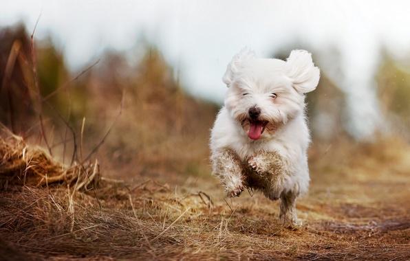 Picture joy, mood, walk
