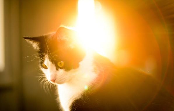 Picture cat, light, animal, morning, sitting