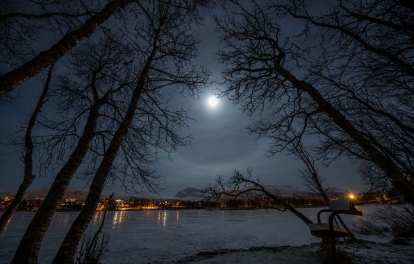 Picture winter, bench, night, lights, lake, Park, the moon, The city