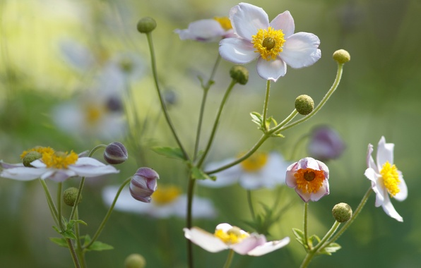 Picture field, flower, plant, petals, meadow