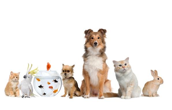 Picture cat, fish, dog, rabbit, parrot, parrot, rabbit, cat, dog, fish