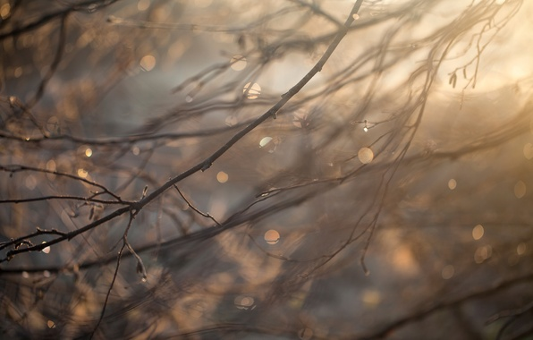 Picture drops, macro, branches