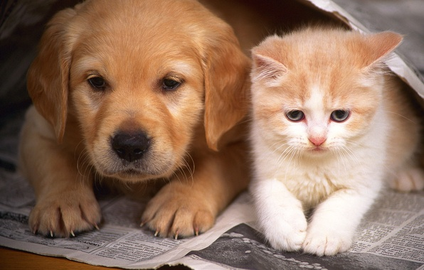 Picture cat, kitty, dog, friendship, puppy