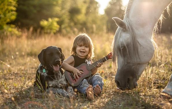 Picture horse, horse, guitar, dog, boy, friendship, friends