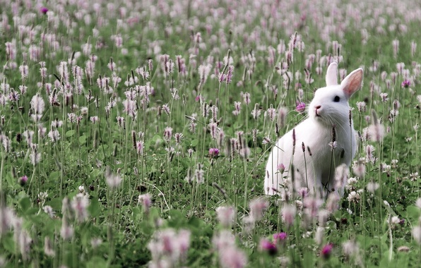Picture greens, field, grass, leaves, flowers, hare, spikelets, clover, Whitey