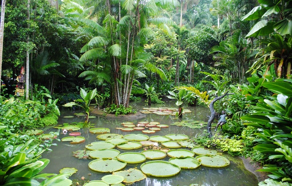 Picture trees, pond, garden, Singapore, the bushes, water lilies, Botanic Gardens