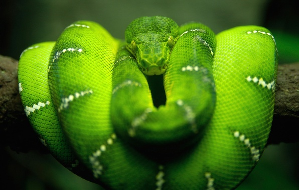 Picture macro, nature, green, snake