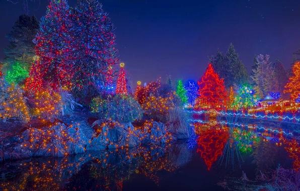 Picture trees, lights, holiday, Canada, Christmas, Vancouver, Botanical garden, the festival of lights, VanDusen Botanical Garden, …
