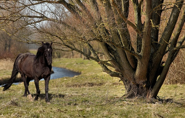 Picture summer, nature, tree, horse