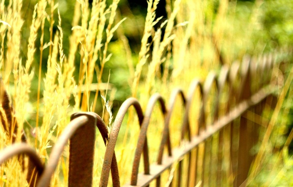 Picture greens, macro, background, widescreen, Wallpaper, the fence, plant, blur, fence, the fence, wallpaper, widescreen, background, …