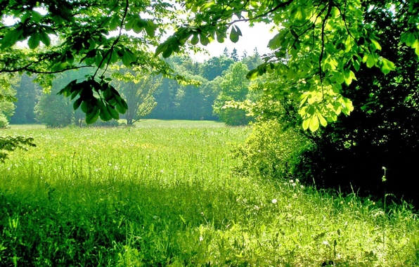 Picture greens, summer, grass, trees, shadows, Sunny day