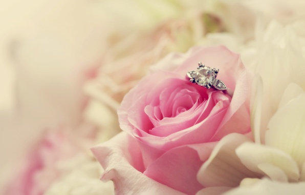 Picture flower, macro, pink, rose, ring