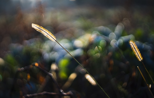 Picture grass, macro, light, nature, glare, bokeh
