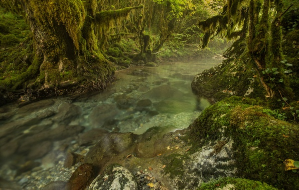 Picture forest, trees, river, stream, stones, thickets, moss