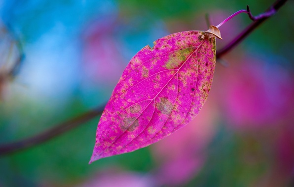 Picture autumn, nature, sheet, paint, branch
