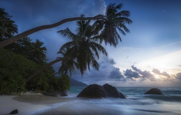 Picture tropics, stones, palm trees, the ocean, coast, The Indian ocean, Seychelles, Indian Ocean, Seychelles