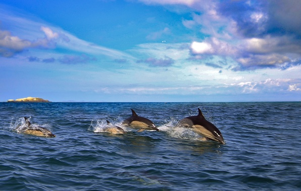 Picture sea, dolphins, mammal