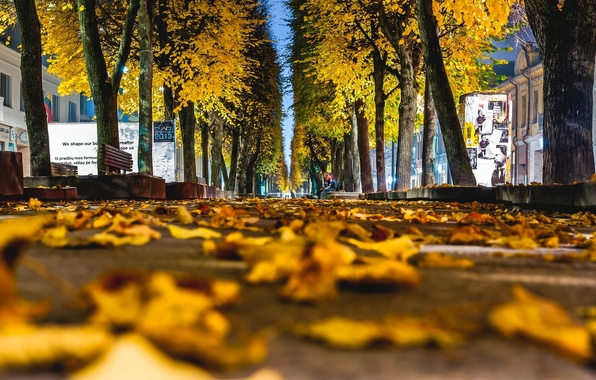 Picture autumn, asphalt, leaves, macro, trees, the city, background, tree, widescreen, Wallpaper, yellow, track, wallpaper, leaves, …