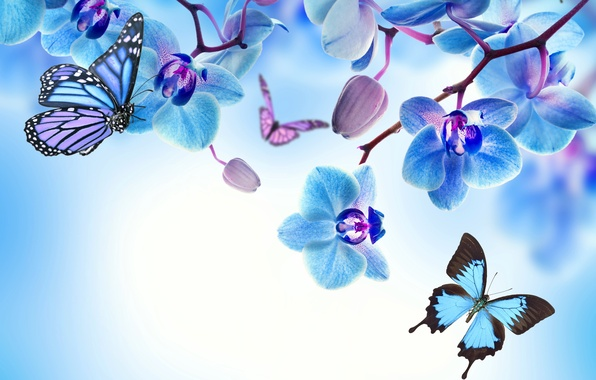 Picture butterfly, flowers, Orchid, blue, flowers, beautiful, orchid, butterflies