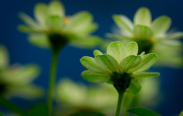Picture flower, flowers, freshness, yellow, mood, focus, green, flowers