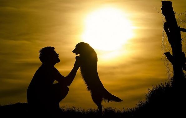 Picture the sun, each, dog, male, silhouette