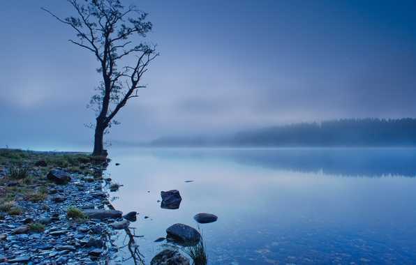 Picture forest, the sky, trees, fog, lake, reflection, blue, tree, shore, Scotland, UK