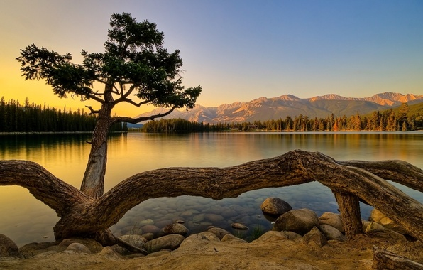 Picture forest, mountains, lake, tree, shore