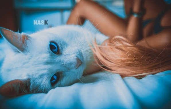 Picture cat, cat, girl, bed, NASK