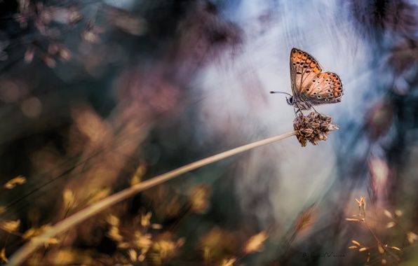 Picture macro, butterfly, plant, bokeh