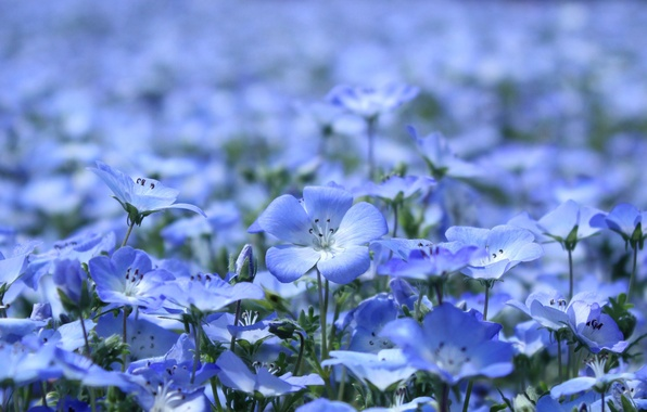 Picture summer, the sun, macro, light, flowers, nature, glade, plants, petals, blue, len