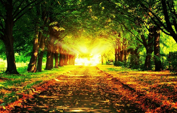 Picture road, light, trees, foliage, Autumn, the bushes