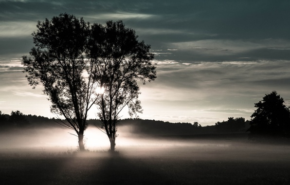 Picture field, forest, trees, fog, two