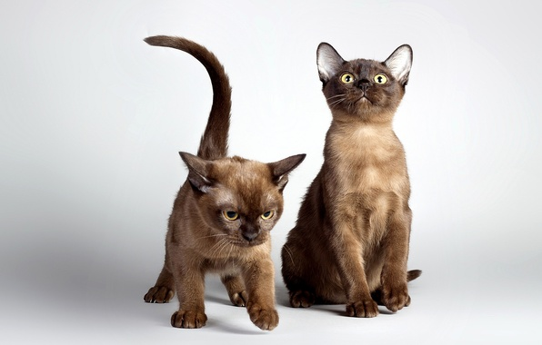 Picture photo, Cats, Kittens, Two, Animals