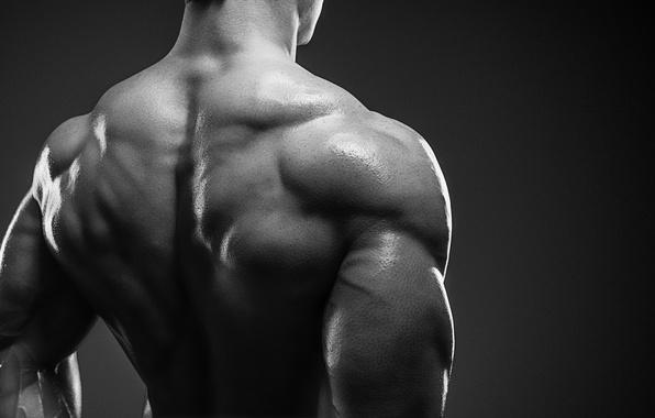 Photo Wallpaper Back Muscles Muscle Mass Bodybuilder