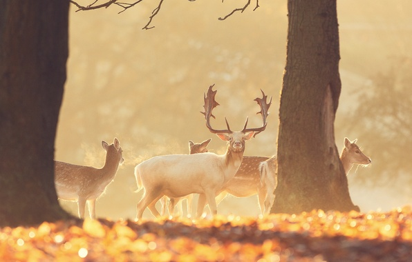 Picture forest, animals, nature, deer