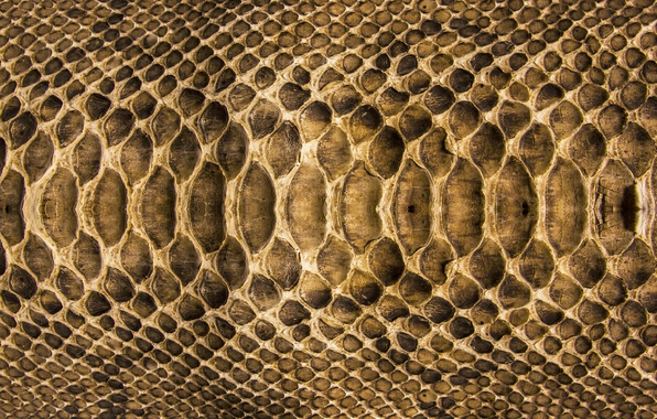 Picture snake, texture, scales, leather, colors