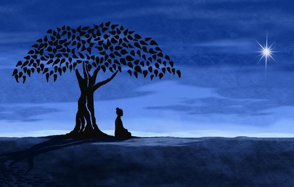 Picture tree, star, Night, meditation
