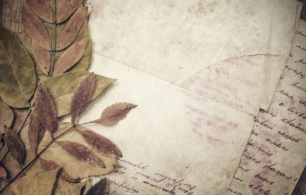 Picture paper, line, vintage, vintage, dry leaves