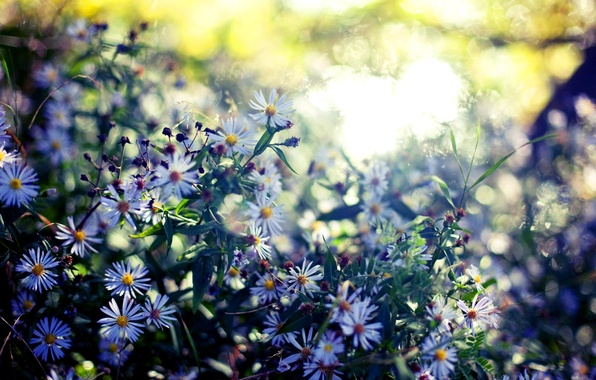 Picture summer, leaves, color, flowers, nature, background, Wallpaper, plants, blur, flowering, bokeh