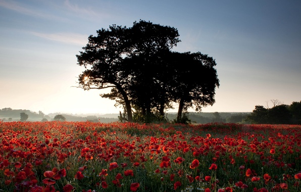 Picture field, summer, the sun, rays, light, trees, flowers, nature, background, Wallpaper, Maki
