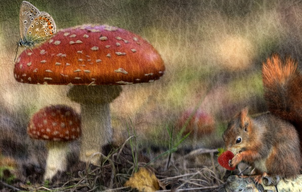 Picture autumn, forest, rendering, butterfly, mushrooms, treatment, texture, protein, berry, art, Amanita, Wallpaper from lolita777