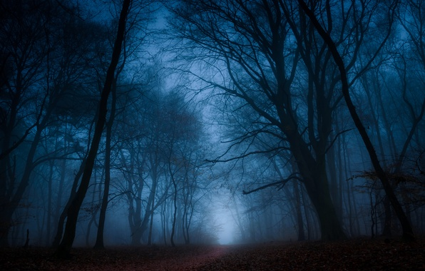 Picture autumn, forest, leaves, trees, branches, fog, the way, silhouette