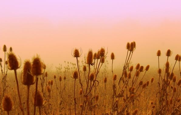 Picture field, flowers, plant, meadow
