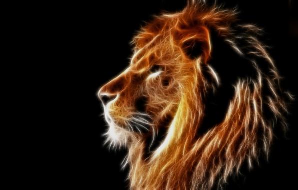 Picture Leo, mane, profile, black background