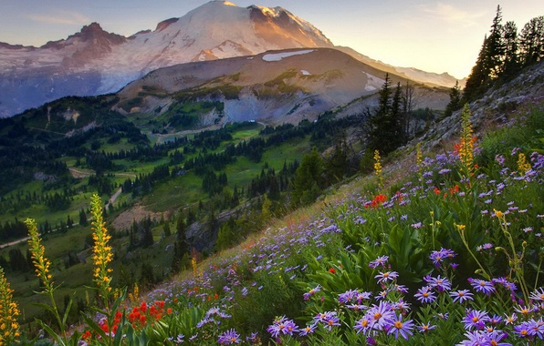 Picture summer, the sky, grass, sunset, flowers, mountains