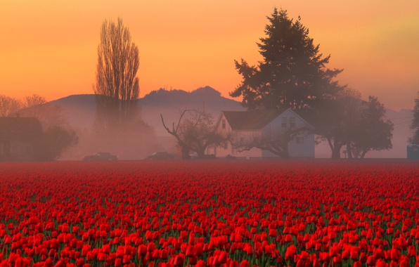 Picture field, the sky, trees, flowers, mountains, fog, house, morning