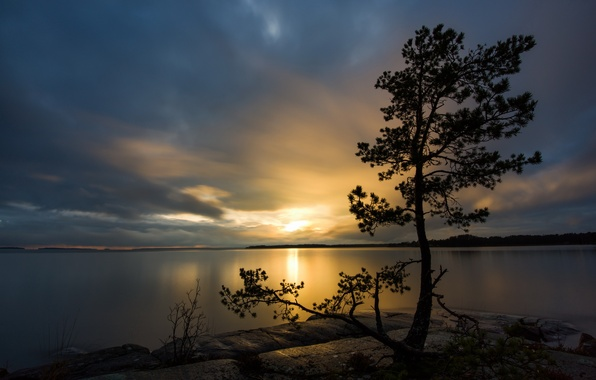 Picture landscape, night, lake, tree