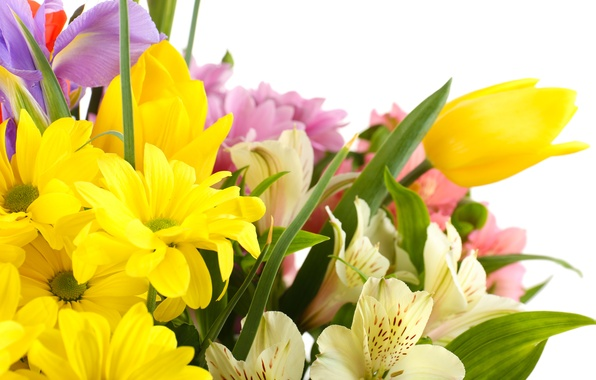 Picture flowers, tulips, white background, irises, white chrysanthemums